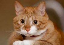 01336e403a5c6a7805bfc02aea957d2a - Google crea un avanzadísimo cerebro artificial y éste decide buscar gatos en Internet