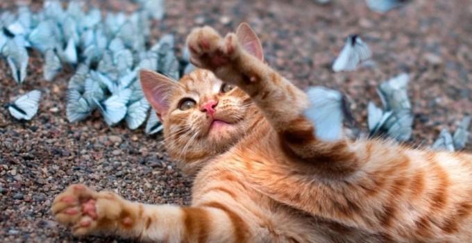 115a268eac0b57e802cbe1d9f70599a0 - Un gato jugando en un paraíso de mariposas azules