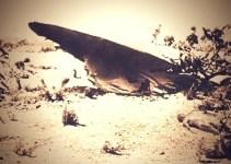 2c3b54c343fb0e46b77fe1723e89ccb5 - Agente de la CIA revela y confirma que el ovni de Roswell no era de este planeta