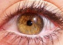83e890e51ea999999de0fad0ae58fd80 - Metodo Natural para Curar Miopia, Hipermetropia, Astigmatismo, Presbicia y Estrabismo