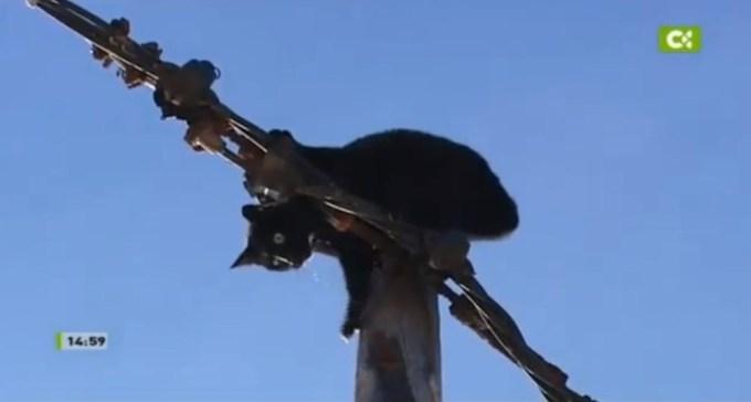 1308b489ed32fd0aa426886e83e15f3c - Gato estuvo durante más de 10 horas colgado en un poste de la luz