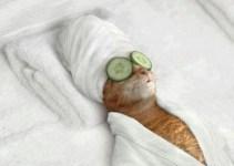 998f7482b60335ff4ff967f8ee12240b - Hotel 5 estrellas para perros y gatos