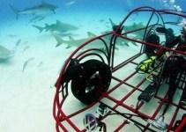 8a6976fea28b3c6fa1bf282a2ab24dbf - El primer coche a prueba de tiburones