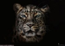 8ff89376d072f546d093af32c351dcc8 - Fotografían a animales en extinción por si las futuras generaciones no llegan a verlos