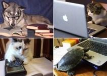 aabc989c29f7021f18d511588a3a476d - Las mascotas que les gusta leer en su tiempo libre