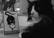 f8bcd4658f70bd8a859b57787d226a7b - Estos son los mejores vídeos de Gatos del 2012