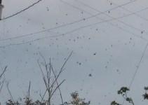02b93e40a87f77a216584ee602e530cc - Lluvia de arañas en Brasil