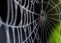 107cc2f08833bc13b95a0891974ee1a9 - La tela de araña capaz de detener en seco un reactor jumbo