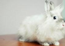 468bf5f58391799e4cdbe1b20493193a - La Union Europea prohíbe probar productos cosméticos en animales antes de lanzarlos al mercado