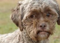 648cedeb1f9039827c51528b6d2f0bbf - Abandonó a su perro porque tenía cara de humano