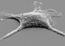 b733bb99c3fbcf2996843c5cb1dcaff2 - Crean una célula 'zombie' más resistente que las vivas