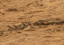 c751a390ac9295853b04d199f361f99e - #Video El Curiosity puede haber fotografiado un esqueleto animal en Marte