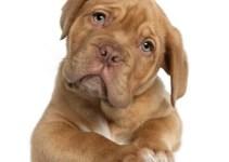 e3ef4446c24c2b9192ff481ba246ca12 - ¿Qué dicen los perros cuando ladran?