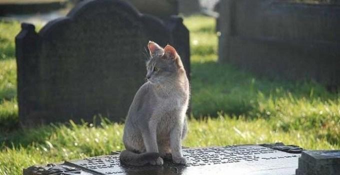 e78c46e17fcaf25ae5e3fd895121344b - Un gato visita a diario la tumba de su amo y le lleva regalos