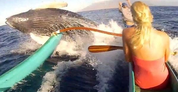 f6f60bca57a307b0a8335b4c2aabc72c - ¡Cuidado con la ballena!