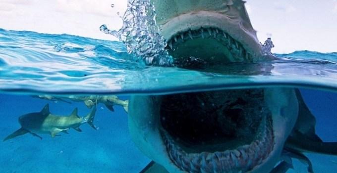 9bd015d07c5bfacb9a0e5aa7302868c3 - Primer plano de los tiburones más aterradores del océano
