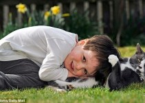 a7ac92c0202d08b485ecb09c07ac6372 - Billy, un gato abandonado y adoptado que ayuda cada dia a un niño autista