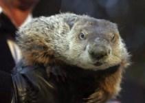 "f7984df7fbc3db416ebcb318b341f4c7 - Piden ""pena de muerte"" para marmota meteoróloga"