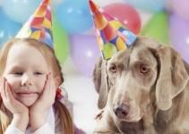46ec392ee5bdf3a4dd7c7cb731fc06cb - ¿Cómo calcular la edad de tu perro?
