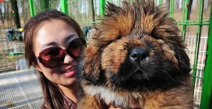 4e36ad3b6ff91101c235b6229b2dd833 - El perro más caro del mundo