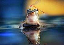 5887c50578562f62006e9f3608514b23 - Mira la peculiar amistad de una rana y una libélula