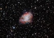 8b42b4b5351e595c249bbf3bfb504cdf - Bacterias del Pacífico conservan 'salpicaduras' de una supernova