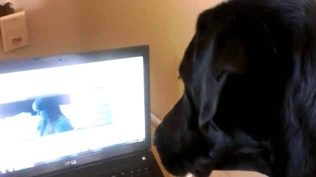 950ba447c2662109b889e610dd1ef253 - #Video Rev el perro que canta los temas de Adele