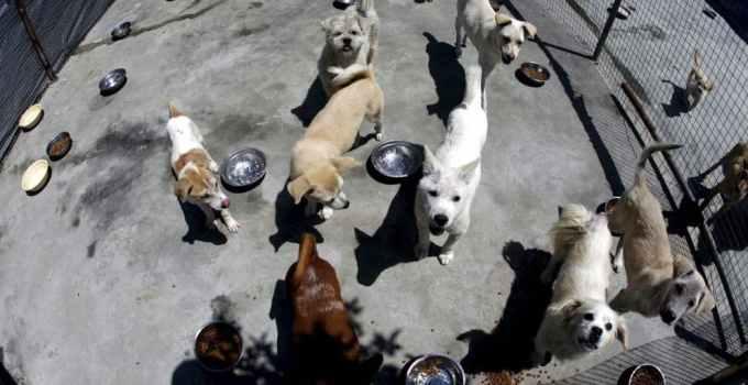 f9e310fcaf952f1bf42d7beb7f326e61 - Campaña para evitar abandonos de perros