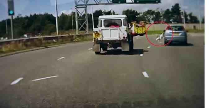 1ade799ae88f9266594f123062831fcf - #Video Perro cae de un coche en marcha en una autopista de Reino Unido