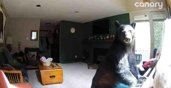 8c00d95b688e8f201388f7cdbaf5aa47 - #Video Un oso entra en una casa, toca el piano, roba comida y se va