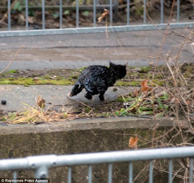 gato negro mojado corriendo