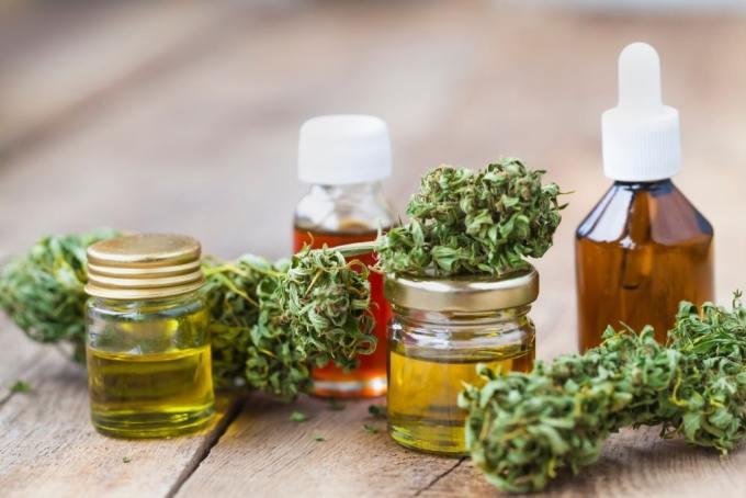 """Cannabis medicinal - Todo lo que tienes que saber sobre """"El Cannabis"""""""