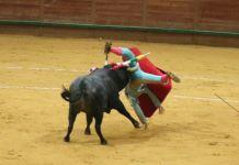 Fea voltereta a Juan Miguel en la Novillada de hoy en Arnedo