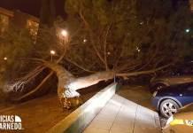 Cae un árbol en el Barrio de la Paz | Foto: Mario Herce