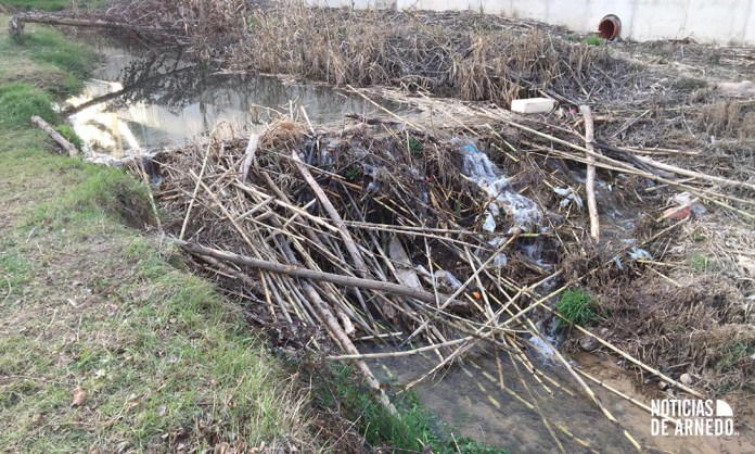 Presa construida por los castores junto al Río Cidacos en Arnedo