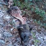 El oso hallado en Moal en enero pudo haber muerto por intoxicación por consumo de hongos