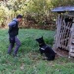 La Guardia Civil intensifica la búsqueda de cebos envenenados en Fuentes del Narcea