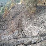 Bomberos y BRIF trabajan en un incendio en Cangas del Narcea