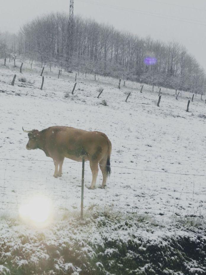 Nieve en Presnas, Allande 1