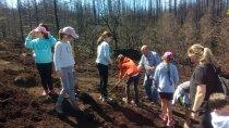 20180425 plantacion arboles colegio berducedo02