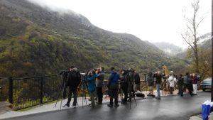 Observación del oso en el Parque Natural de Somiedo