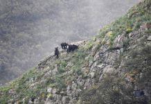 Osos en el Parque Natural de Somiedo