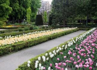 exposicion, real jardin botanico, tulipanes
