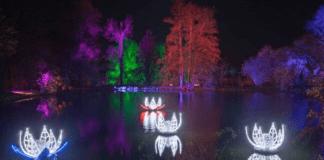 luces jardin botanico, iluminacion jardin botanico, jardin botanico de madrid