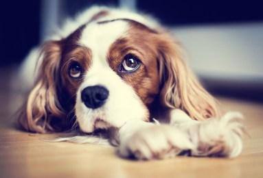 purepassionphotography1-383x260 Noticias de perros - Inicio