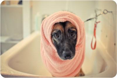 perrosyastrologia-400x266 Noticias de perros - Inicio