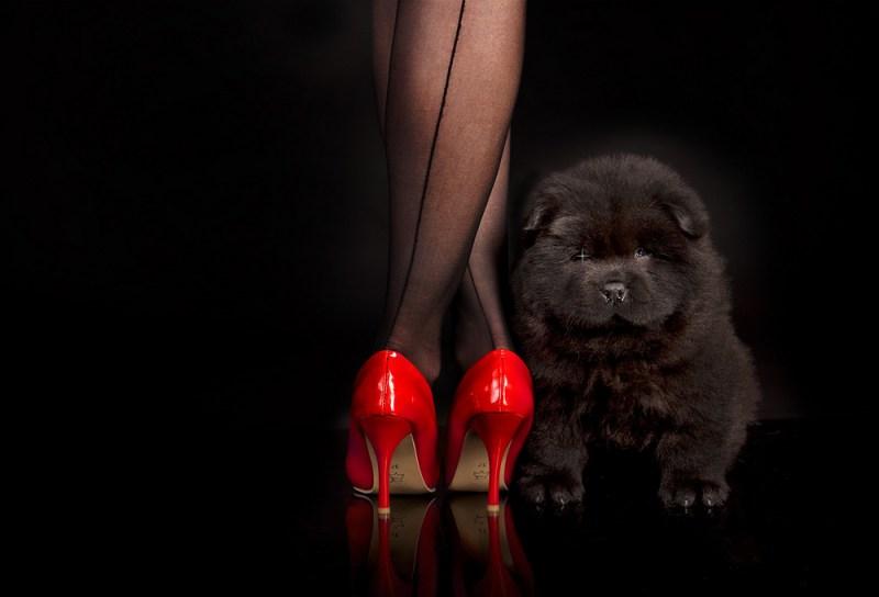 carla-ghysels4-800x544 Noticias de perros - Inicio