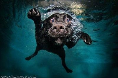 underwater-dogs-seth-casteel-9-400x266 Noticias de perros - Inicio