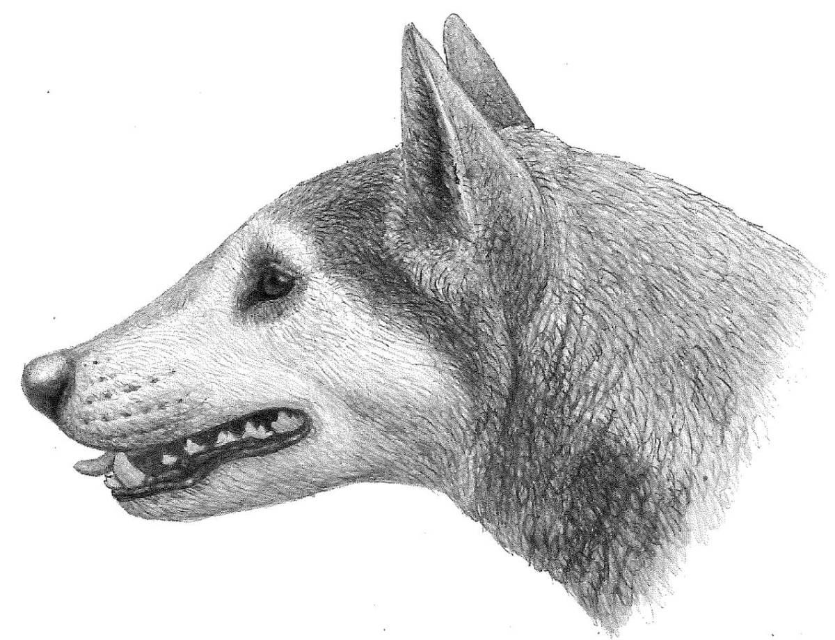ancestro del lobo
