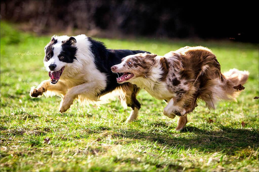 anjahtroha Noticias de perros - Inicio